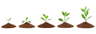 THE 7 PS OF A BUSINESS GROWTH PLAN